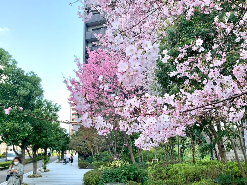 来年こそは新宿でお花見したい